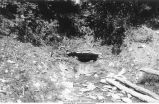 Small spring in Trenton Limestone, west of Devil's Den, Iowa, late 1890s or early 1900s