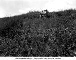 Frank Leverett, George F. Kay, and Paul MacClintock in the field, Lime Springs, Iowa, July 4, 1925