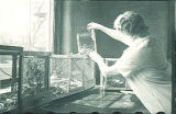 Woman examining zoological specimens, The University of Iowa, 1930s?