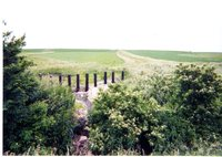 Cattle panel outlet structure