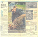 """The onion harvest,"" 1980s?"