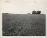 Contour farming on the Rees farm.