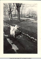 Denise, the dog standing on main driving lane, looking towards snow fence.
