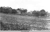Vegetable gardens of West, West Amana, Iowa,ca. 1910