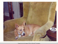 Upclose view of corgy in chair in living room