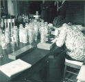 Student working on lab experiment, The University of Iowa, 1930s?