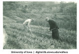 Henry Wallace hoeing with Chinese man, China, 1944