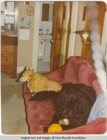 Mollie and Fannie on couch