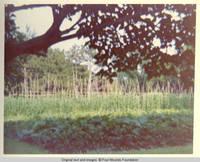 View of vibrant vegetable garden