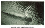 Mock sea monster on Iowa River, The University of Iowa, 1920s