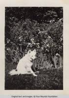 Dog Denise