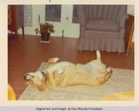 Dog Molly