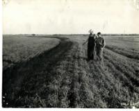 Men Examining a Field