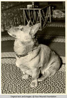 Dog sitting up on a rug
