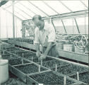 Man inspecting plants inside a greenhouse, The University of Iowa, 1950s