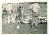 Scientific expedition in Hawaii with market fishing near Honolulu, The University of Iowa, 1920