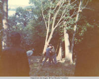 Group of men cutting down a tree by the Cabin