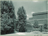 Trees outside the Art Building, the University of Iowa, August 1939