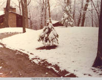 Tree line along the path to cabin