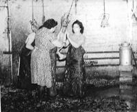 Chicken plucking at Malvern Cold Storage Co.