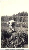 Man in vegetable garden