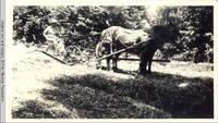 John Heitzman on haycutter with horses