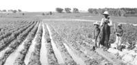 Early Farmers_Exhibit