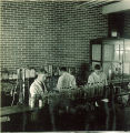 Students at work  in pharmacy laboratory, The University of Iowa, 1930s