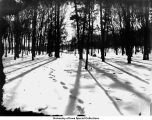 City Park, footprints in snow, Iowa City, Iowa, between 1915 and 1920