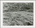 Damaged crops