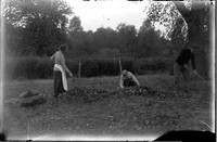 AG 233  Gardeners