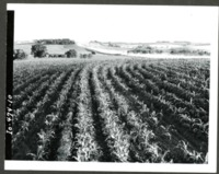 Crop Yield on Erwin W. Cole Farm