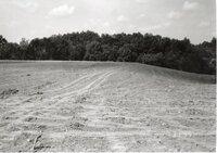 1995 - After construction of sediment basin on Dale Edmonds' farm