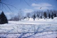 Snow piled in a windbreak.