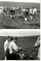 Soil judging, 1991