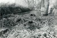 Beaver Dams on Keith Amstutz Farm