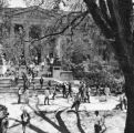 Many students walking in the shade of a large tree in front of Curtiss Hall, 1971