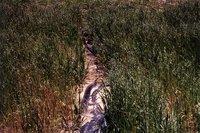 John Kiulahan agricultural land