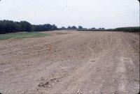 Dirt field with orange post