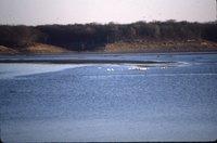 Wildlife on lake