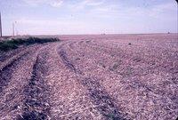 No-Till farmland, 1983