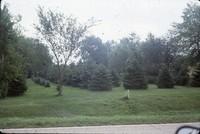 Windbreak on John Coburn's farm.