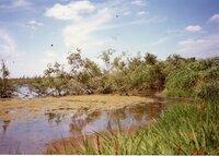 1987 -Craig Murguia Pond