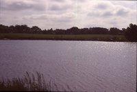 Wetland on the Wyatt Farm.