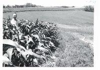 Contour strips on Lyle Felten land, 1967