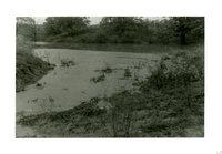Clift Bennett Farm Pond, 1959