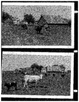 Two photographs of John Henry Nickerson's farm