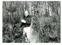 Unidentified man examining evergreen tree