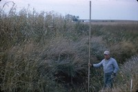 Man measures a small gully.