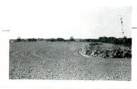 O Caparoon, 1959<br />
